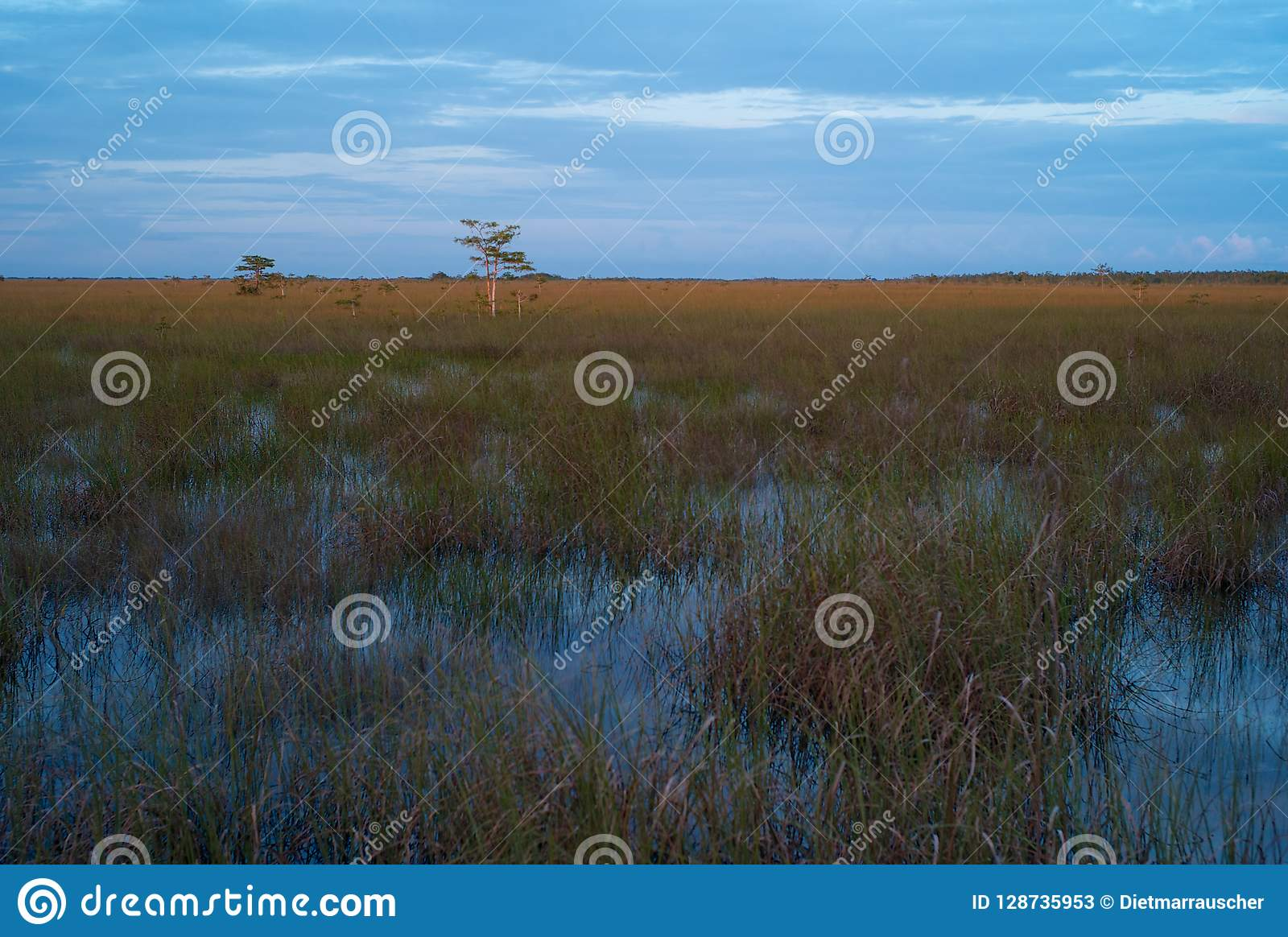 Evening Landscape of the Everglades