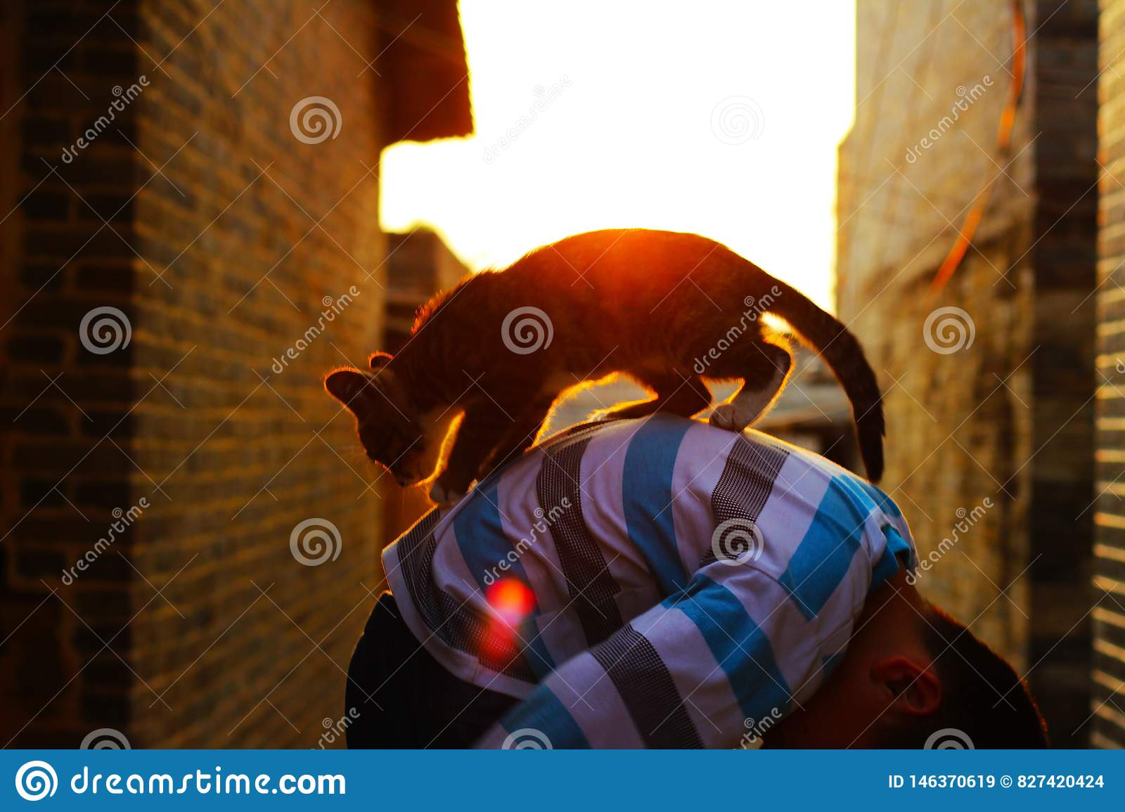 In the evening a little boy is holding a cat