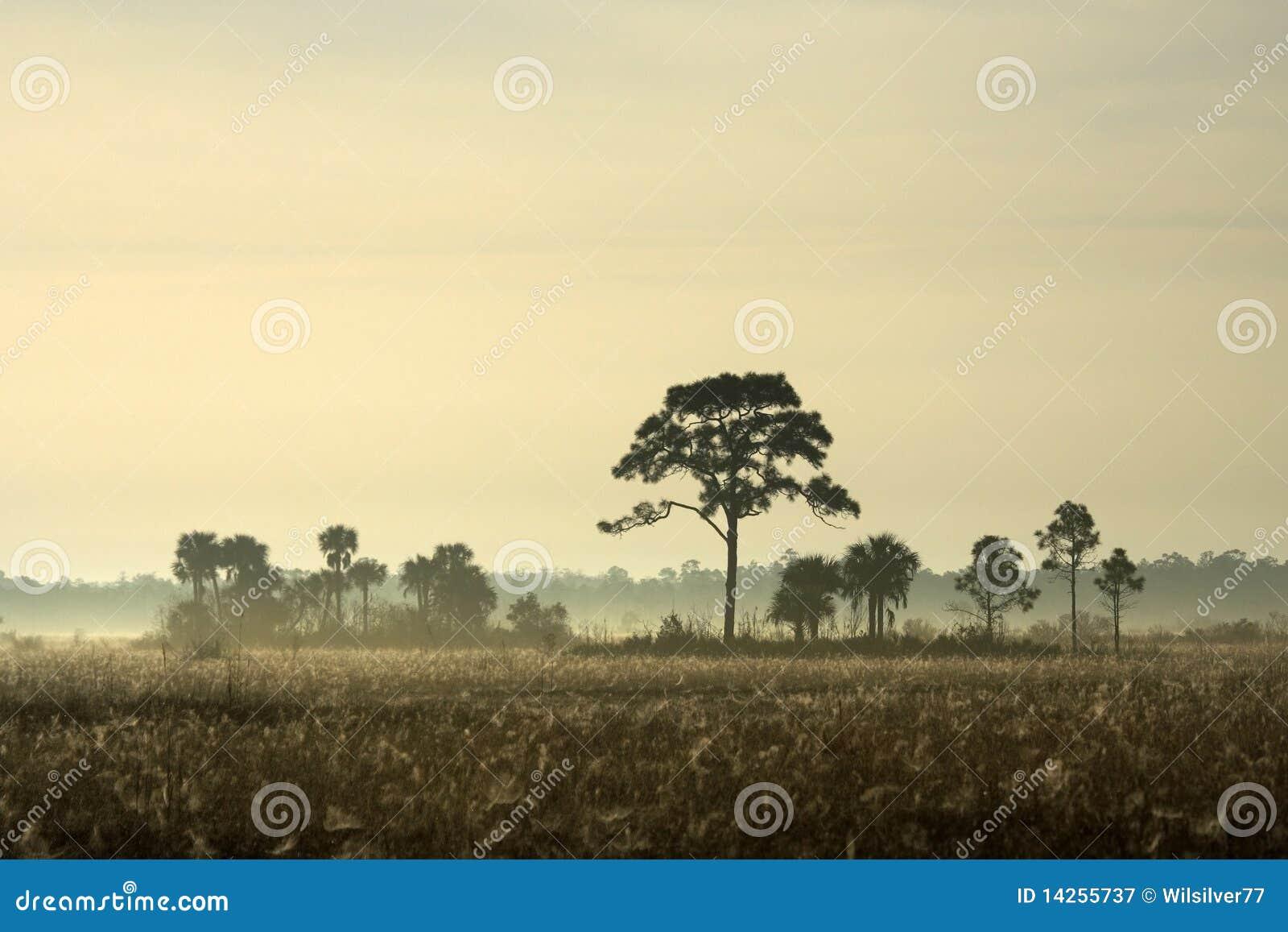 Everglades αιώρα