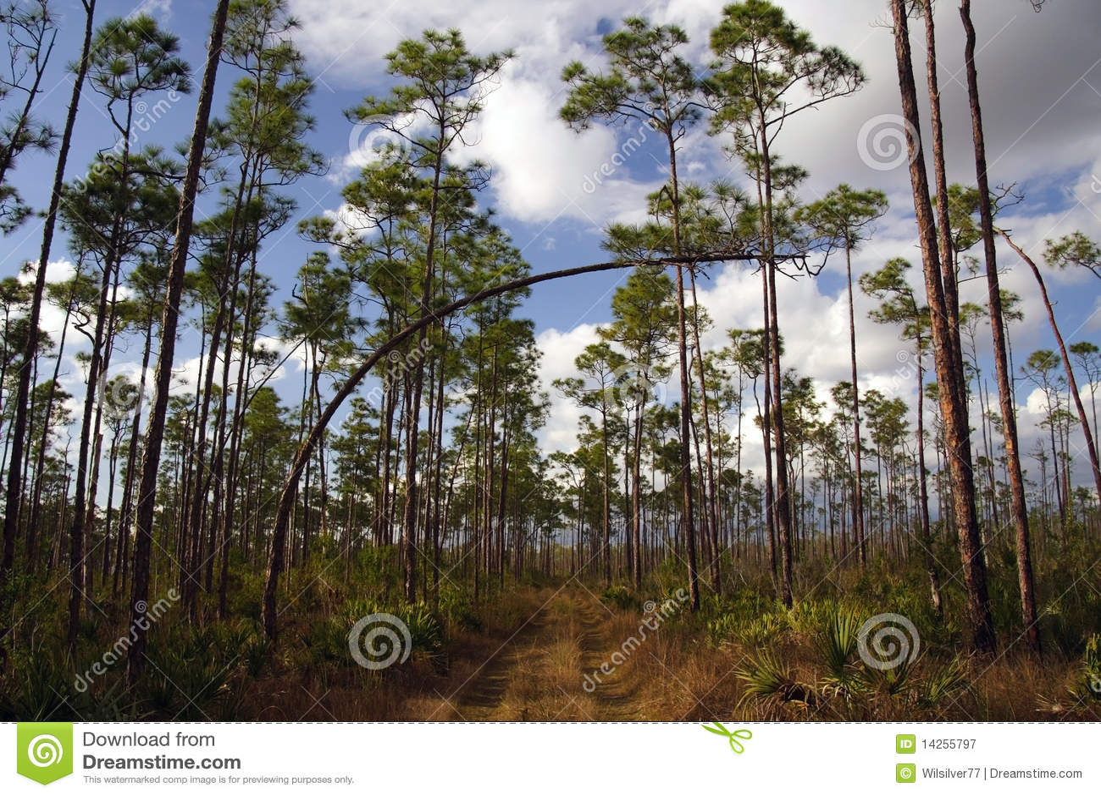 Everglades πεζοπορία