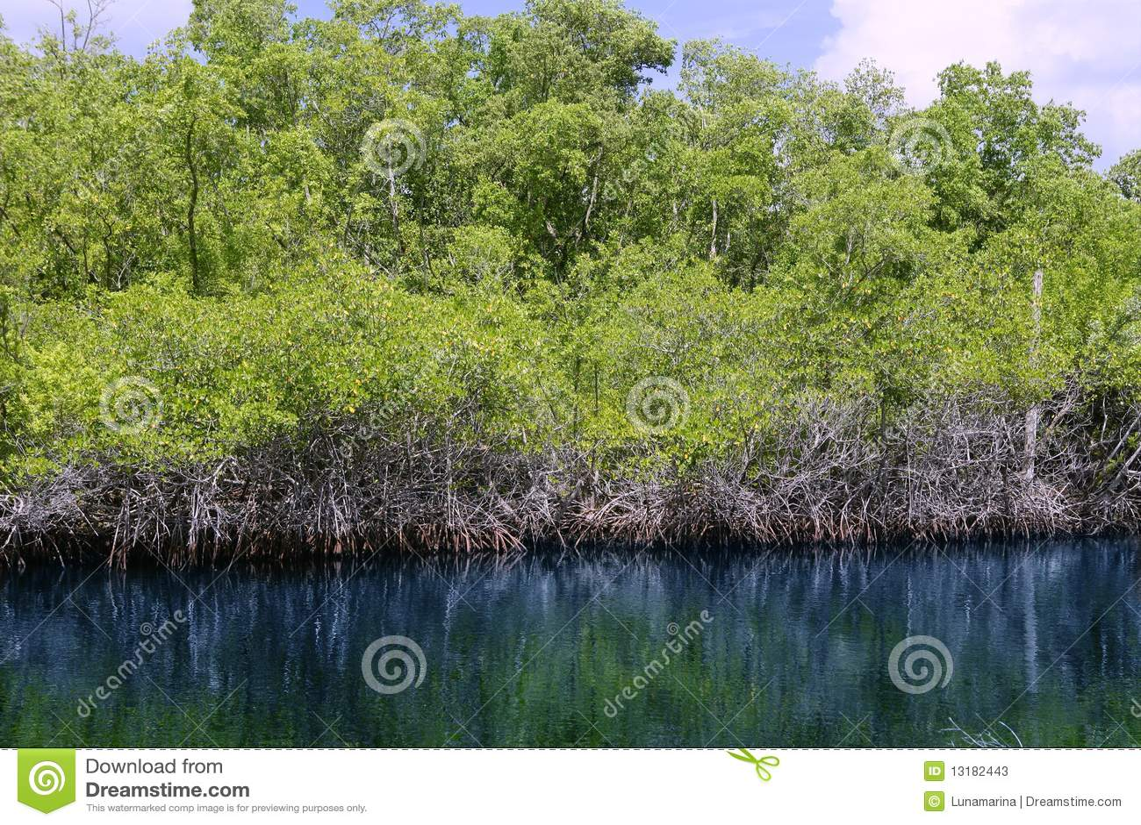 Everglades ποταμός τοπίων της Φλώρι&delt