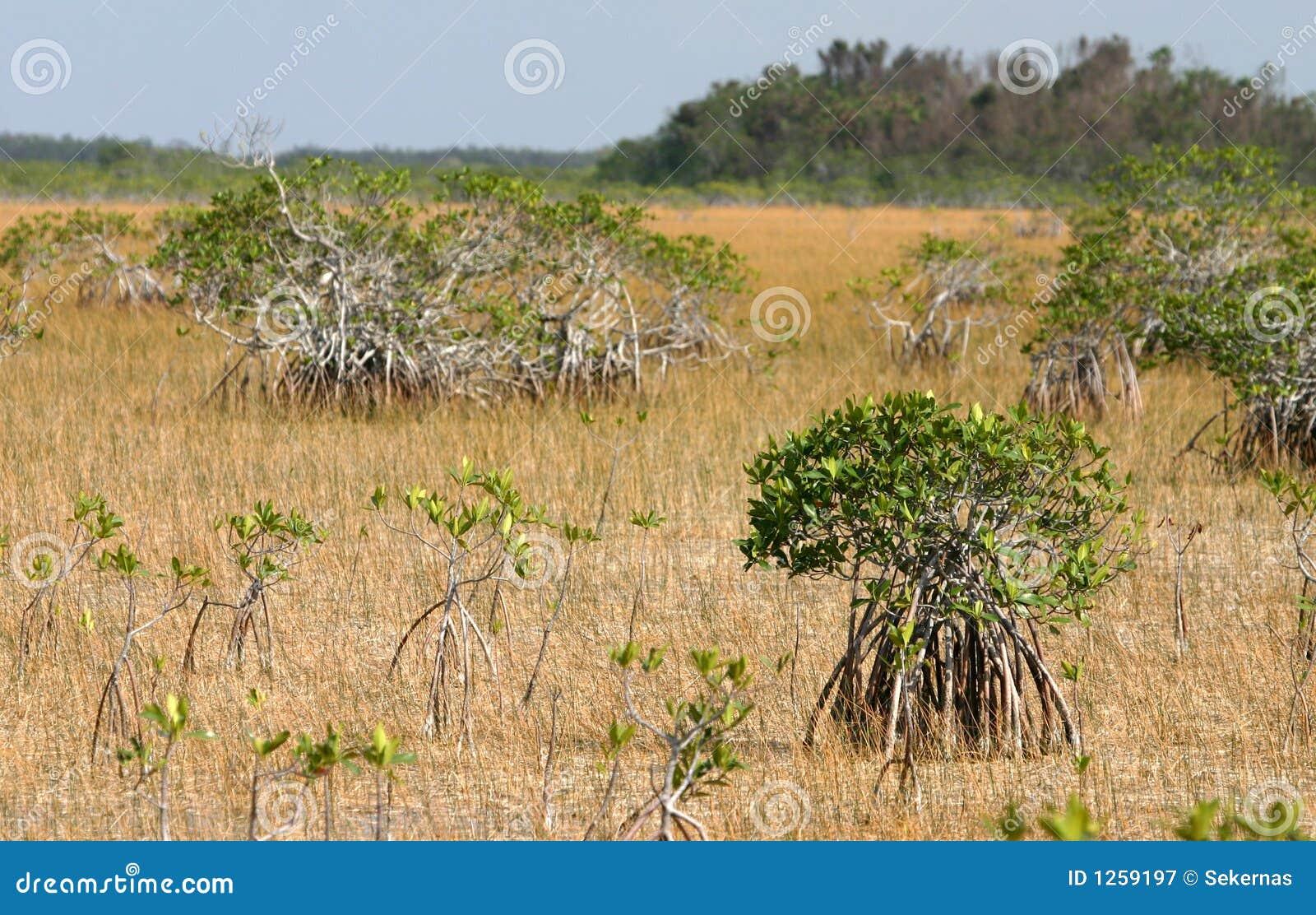 Everglades τοπίο