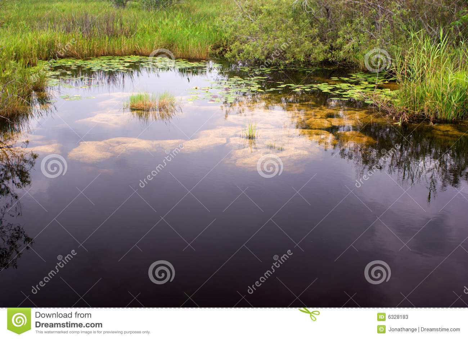 Everglades Canal Landscape