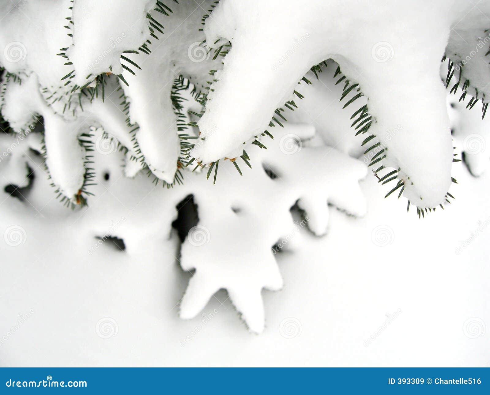 Evergreen dello Snowy
