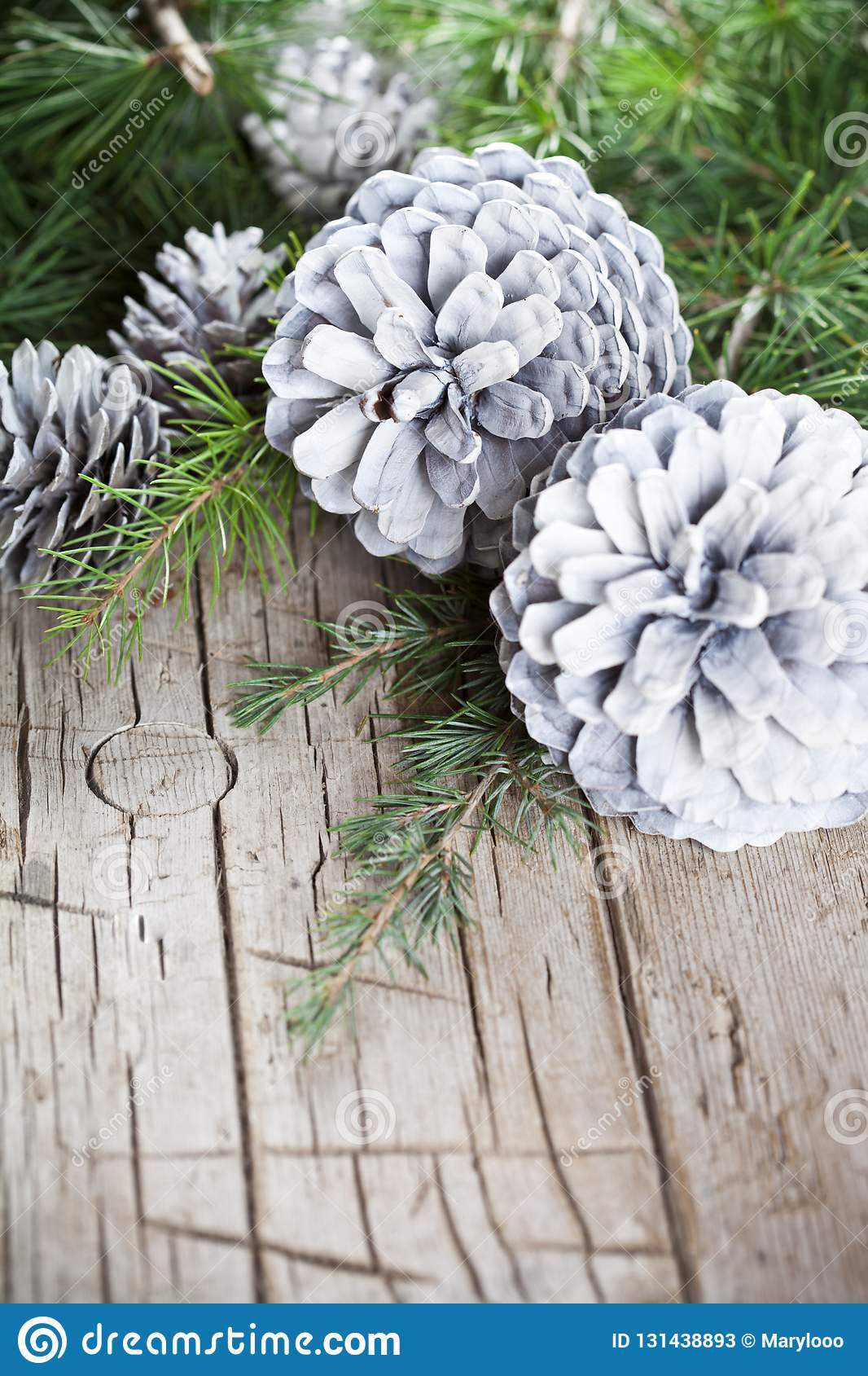 Evergreen fir tree branch and white pine cones closeup on wooden background