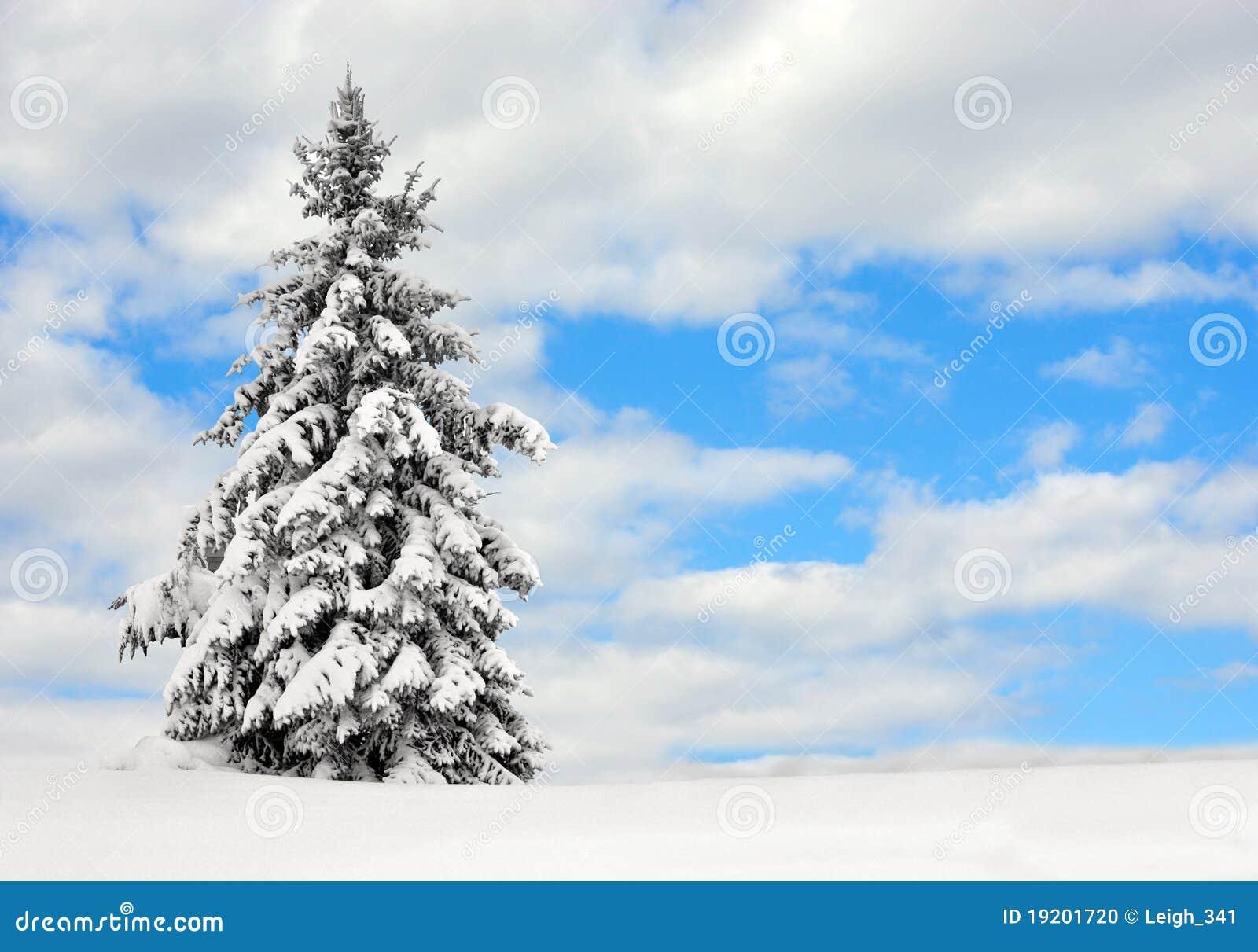 Evergreen nella neve