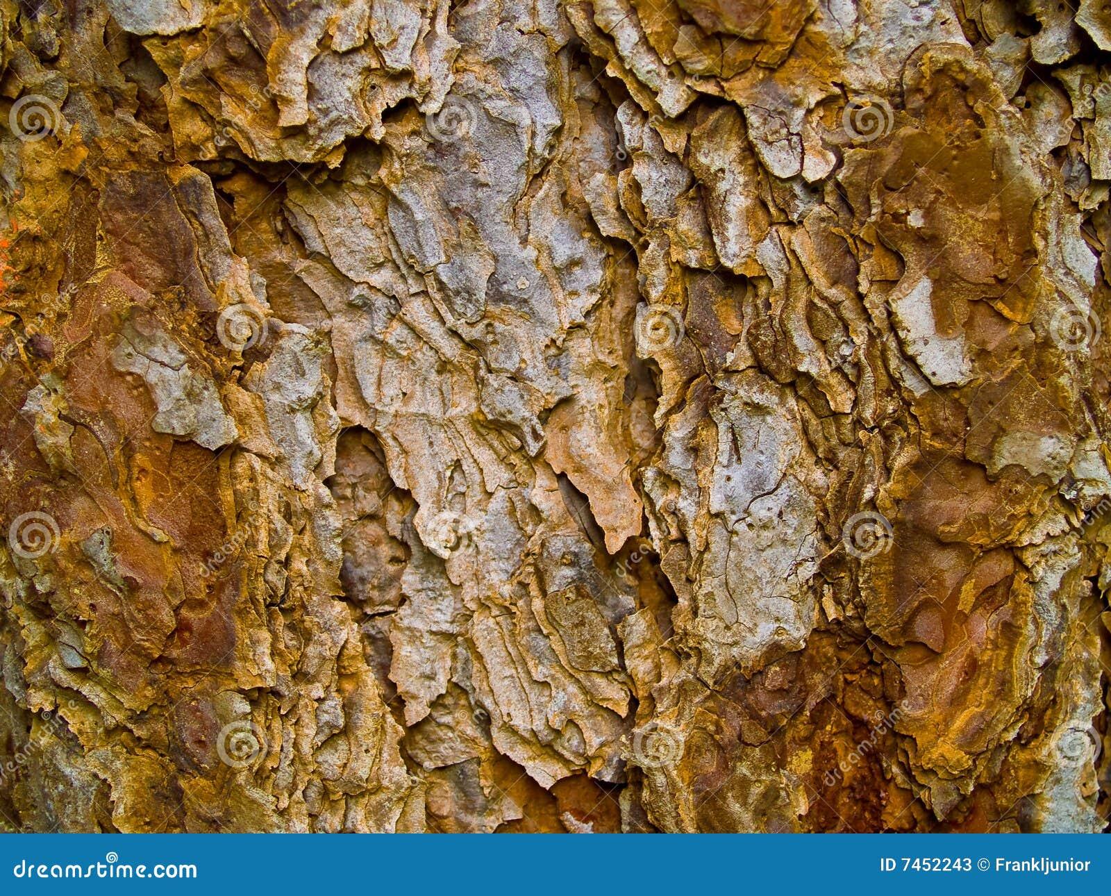 evergreen tree bark background - photo #4
