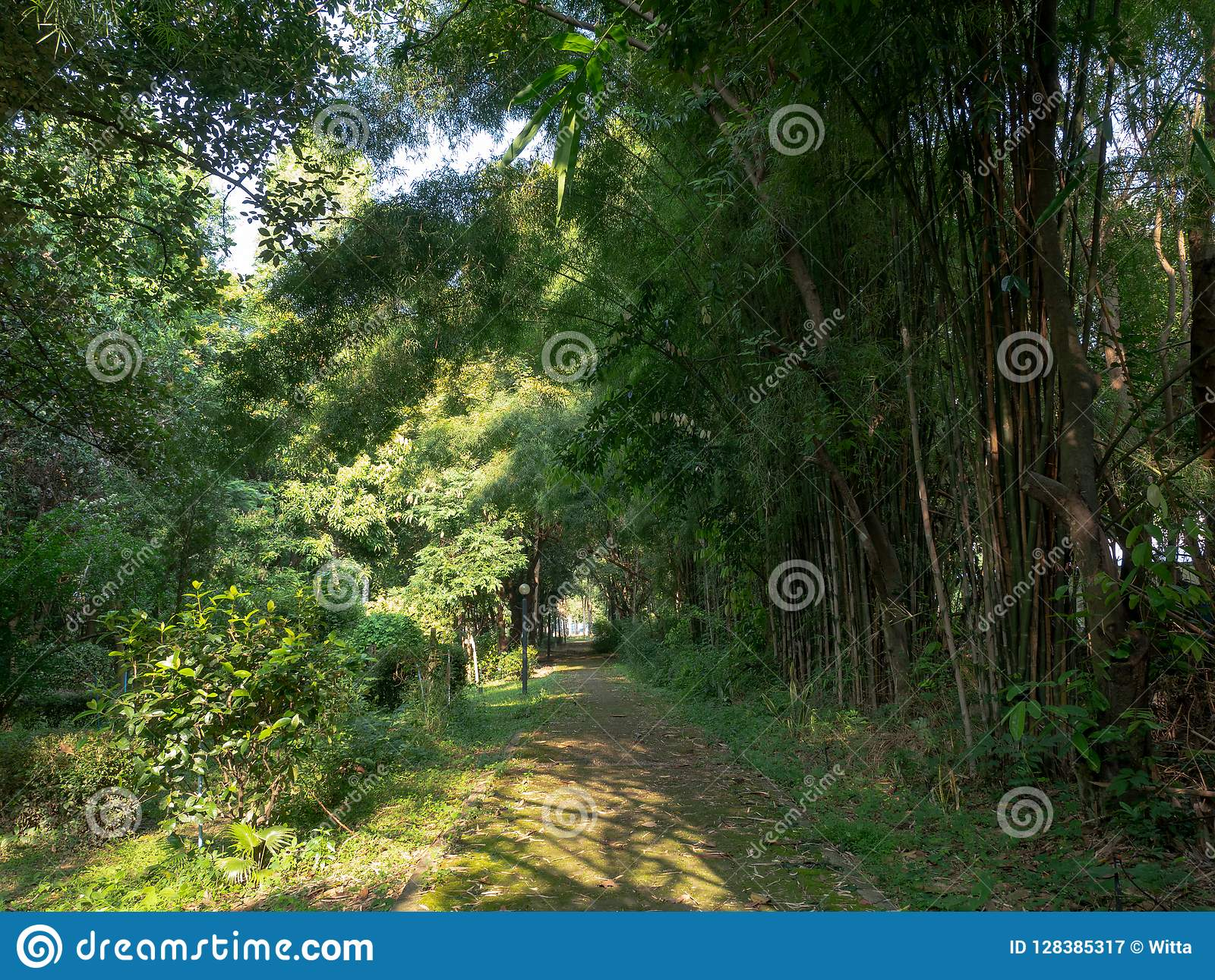 Garden Path And Light And Sunshine In Morning Stock Image Image Of Evergreen Beauty 128385317
