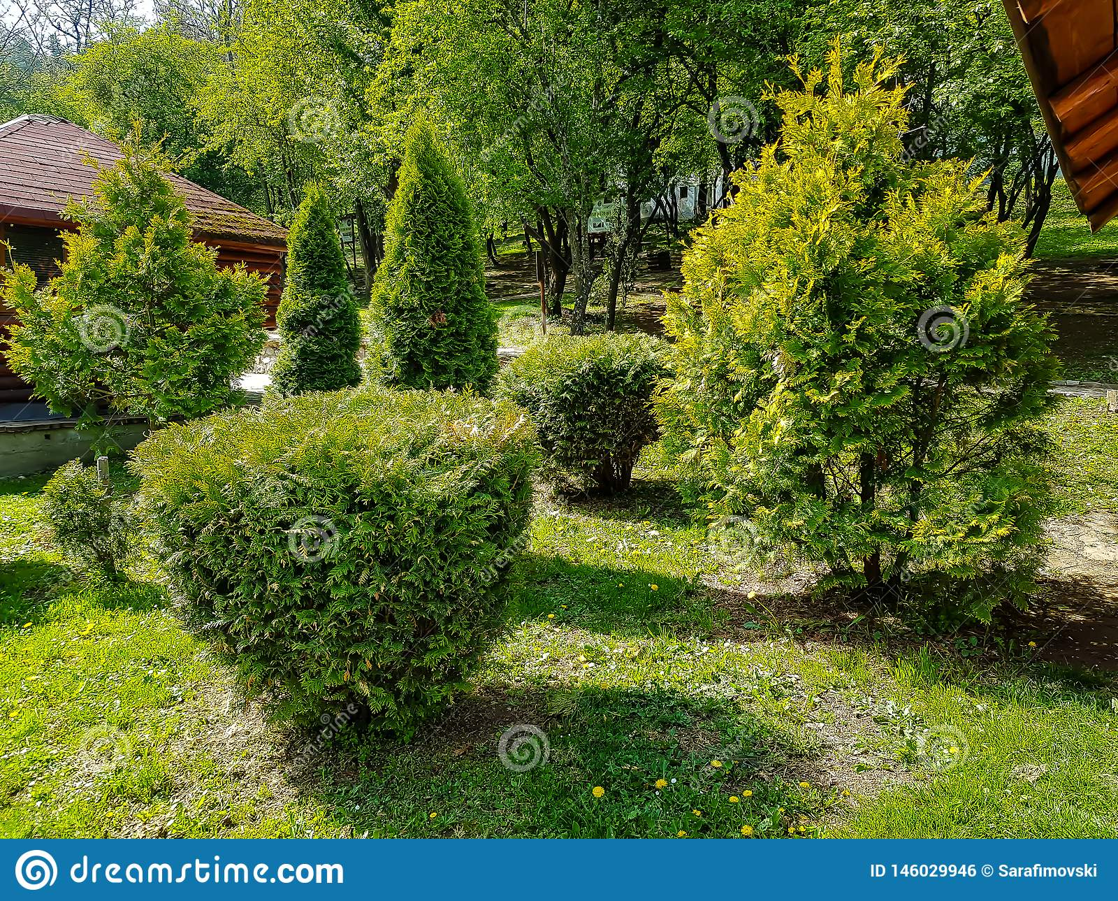 Evergreen Trees In A Small Garden With Foliage Stock Photo Image