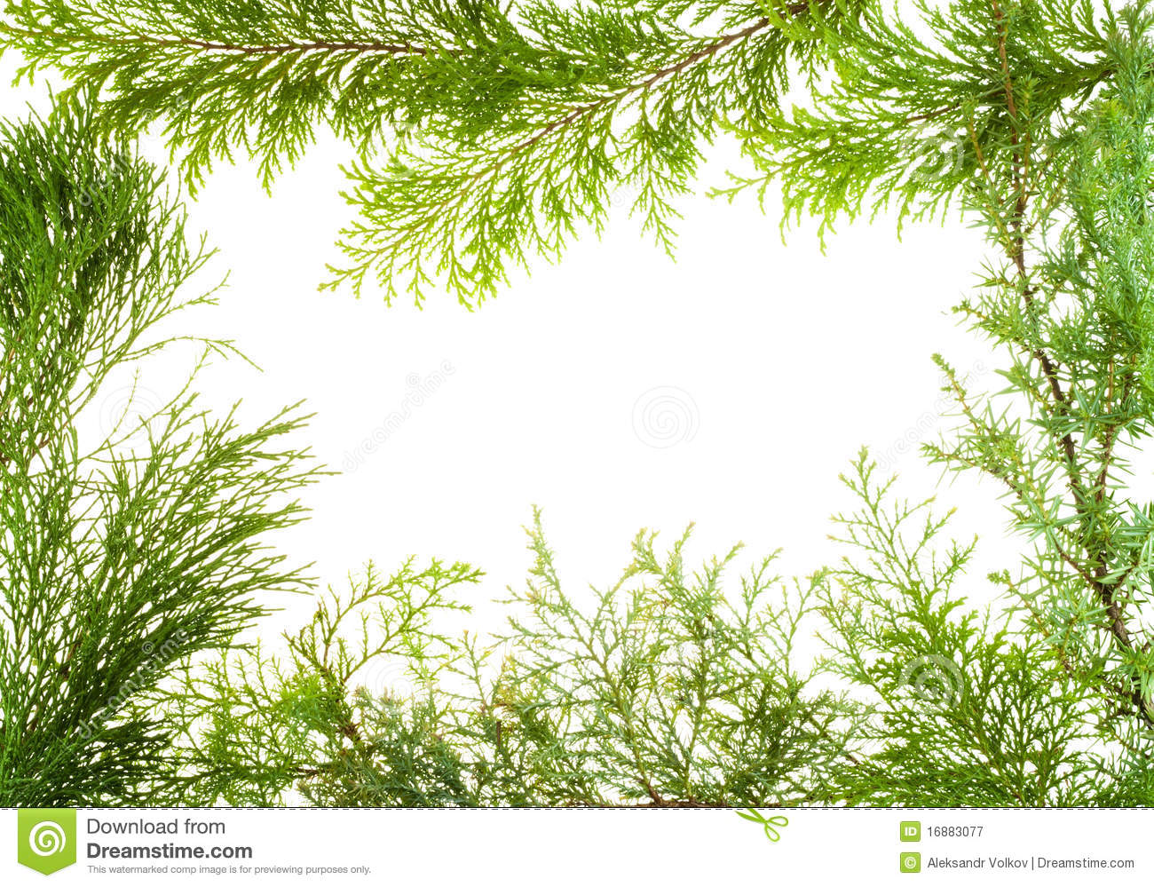 Evergreen various plants branches frame royalty free stock photography image 16883077 - Marcos para plantas ...