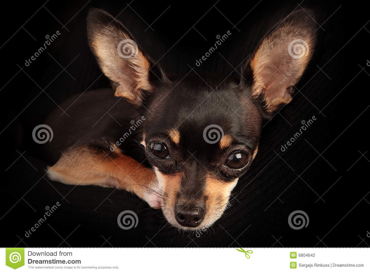 every dog needs a home stock photography image 6804642