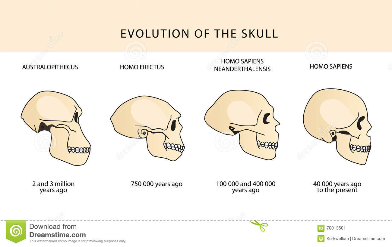 a look at the evolution of humans from the australopithecus to modern day homo sapiens Scientifically known as homo sapiens in the encyclopedia of life the scientific study of human evolution such as australopithecus modern humans.