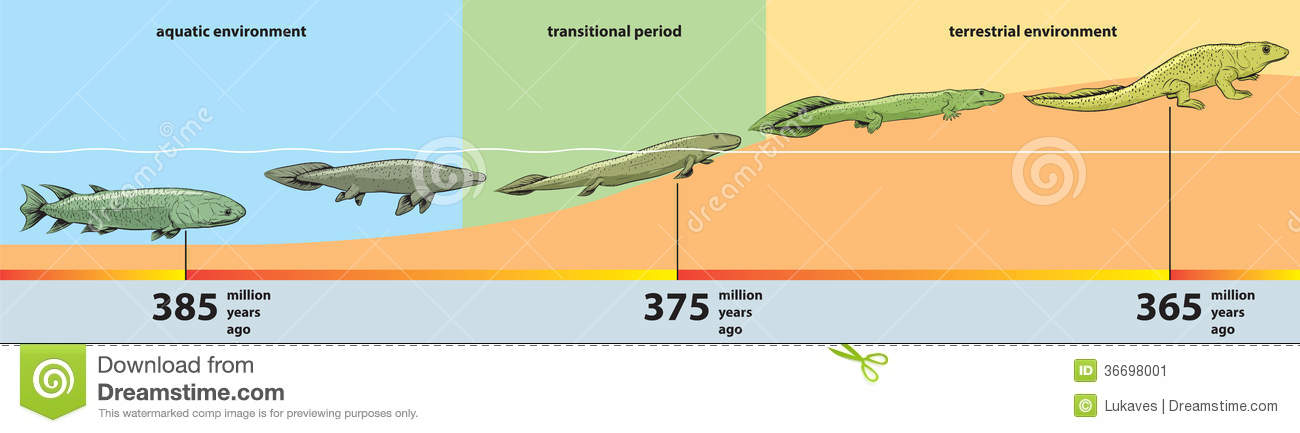 Vector illustration of the evolution from fish to reptiles.