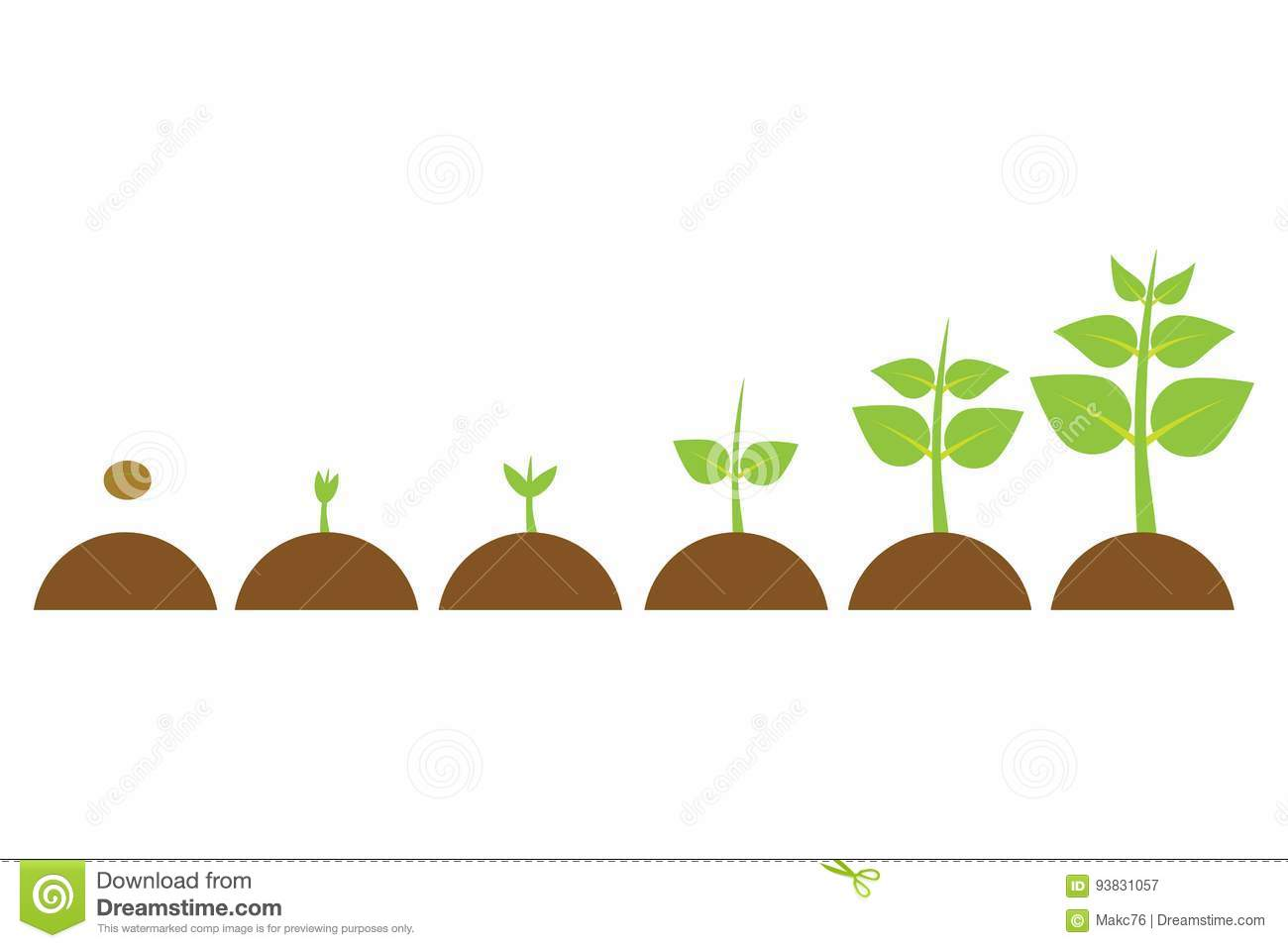germination cartoons  illustrations  u0026 vector stock images