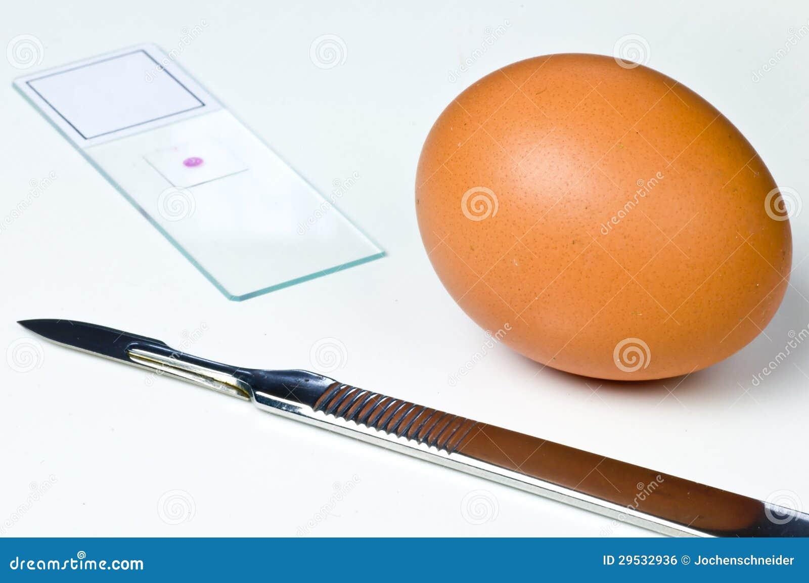 Exame dos ovos