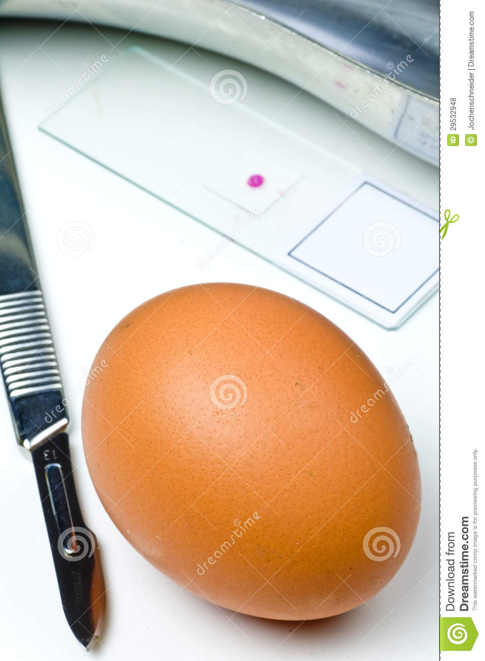 Examination of eggs