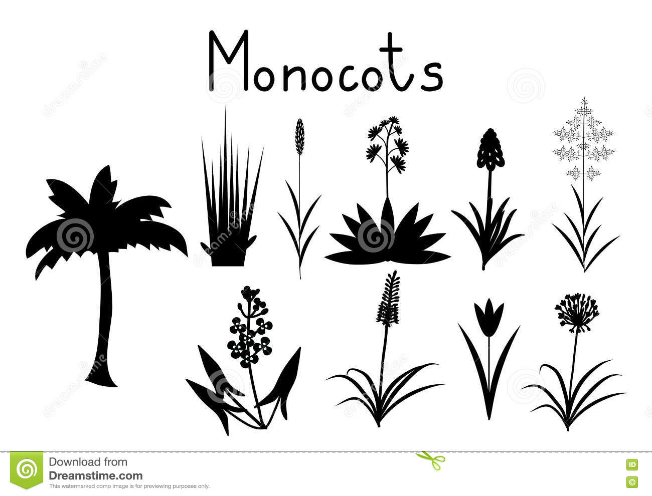 monocots cartoons illustrations amp vector stock images