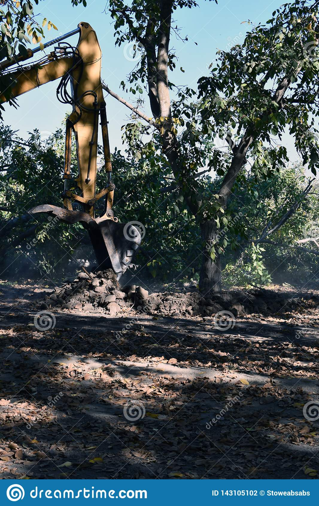 Excavador usado para desenterrar el árbol