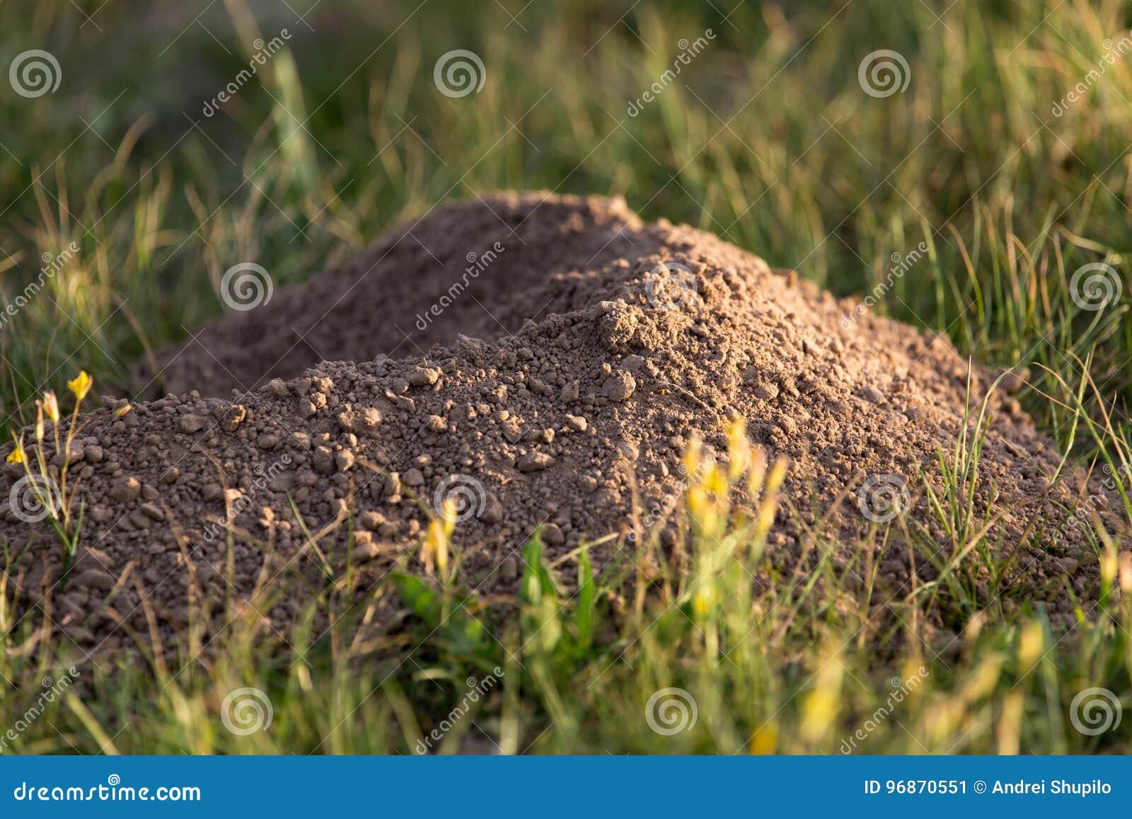 Excavated soil mole nature
