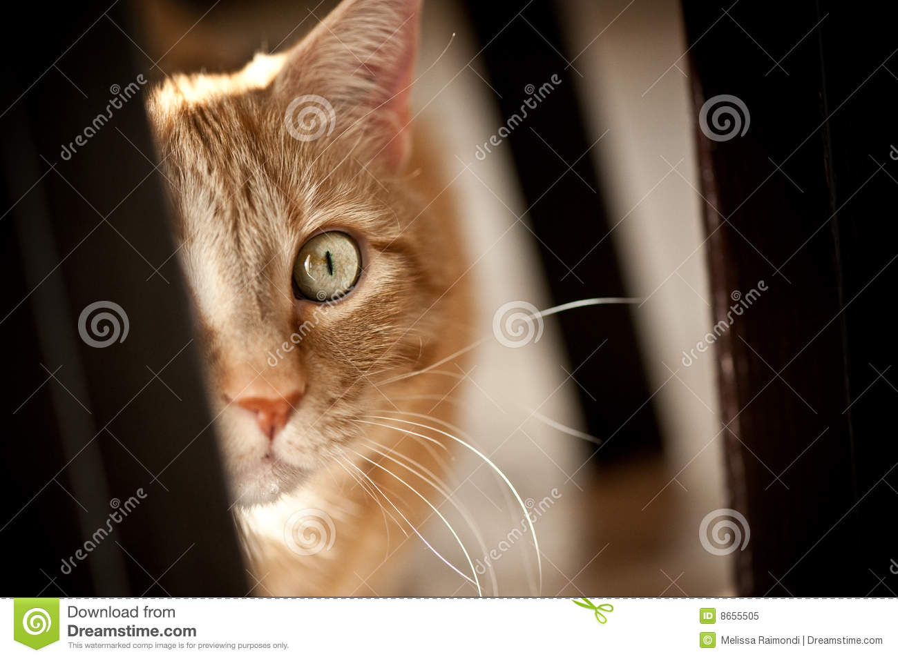 excited cat royalty free stock photo