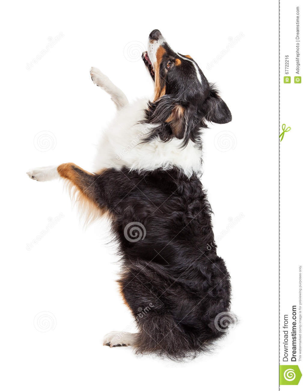 Large Excited Dog Breed