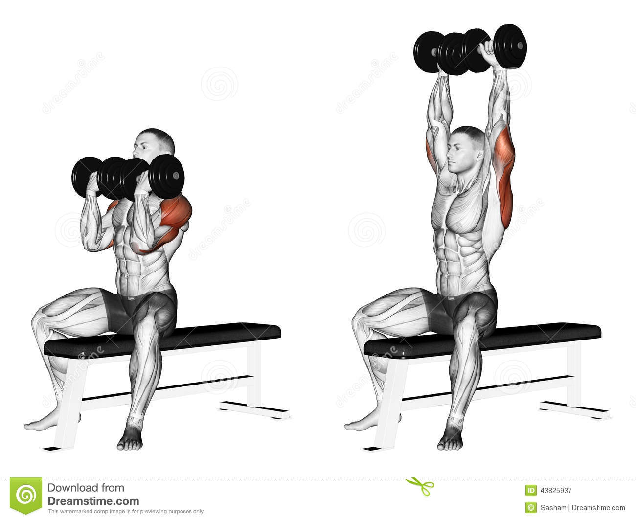 Exercising. Alternating dumbbell bench press with