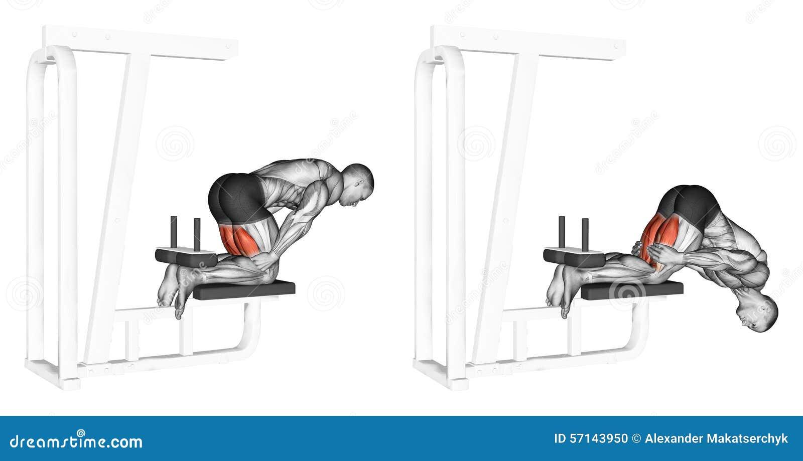 Magnífico Diagrama De Tendón De La Rodilla Viñeta - Anatomía de Las ...