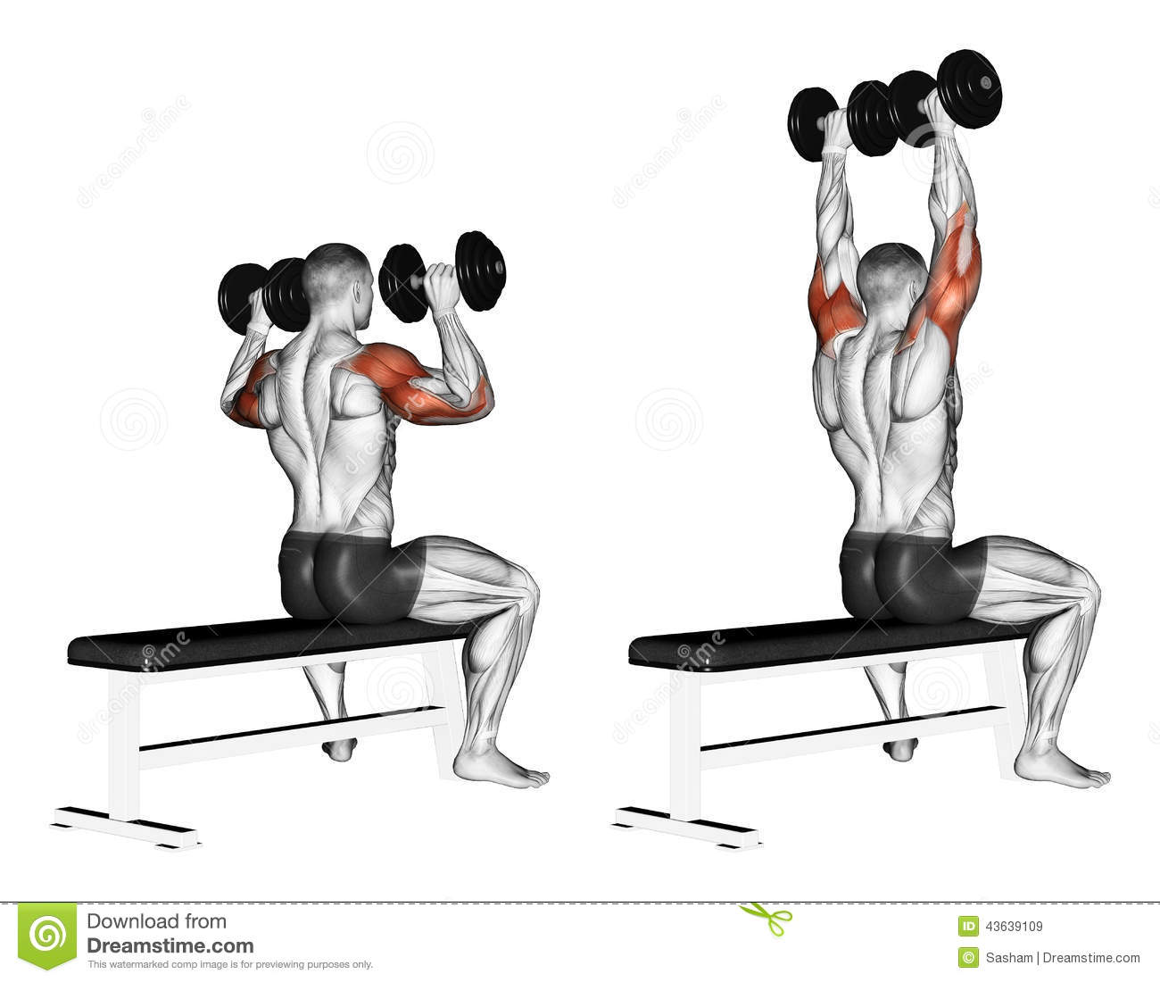 Exercising. Bench dumbbell sitting