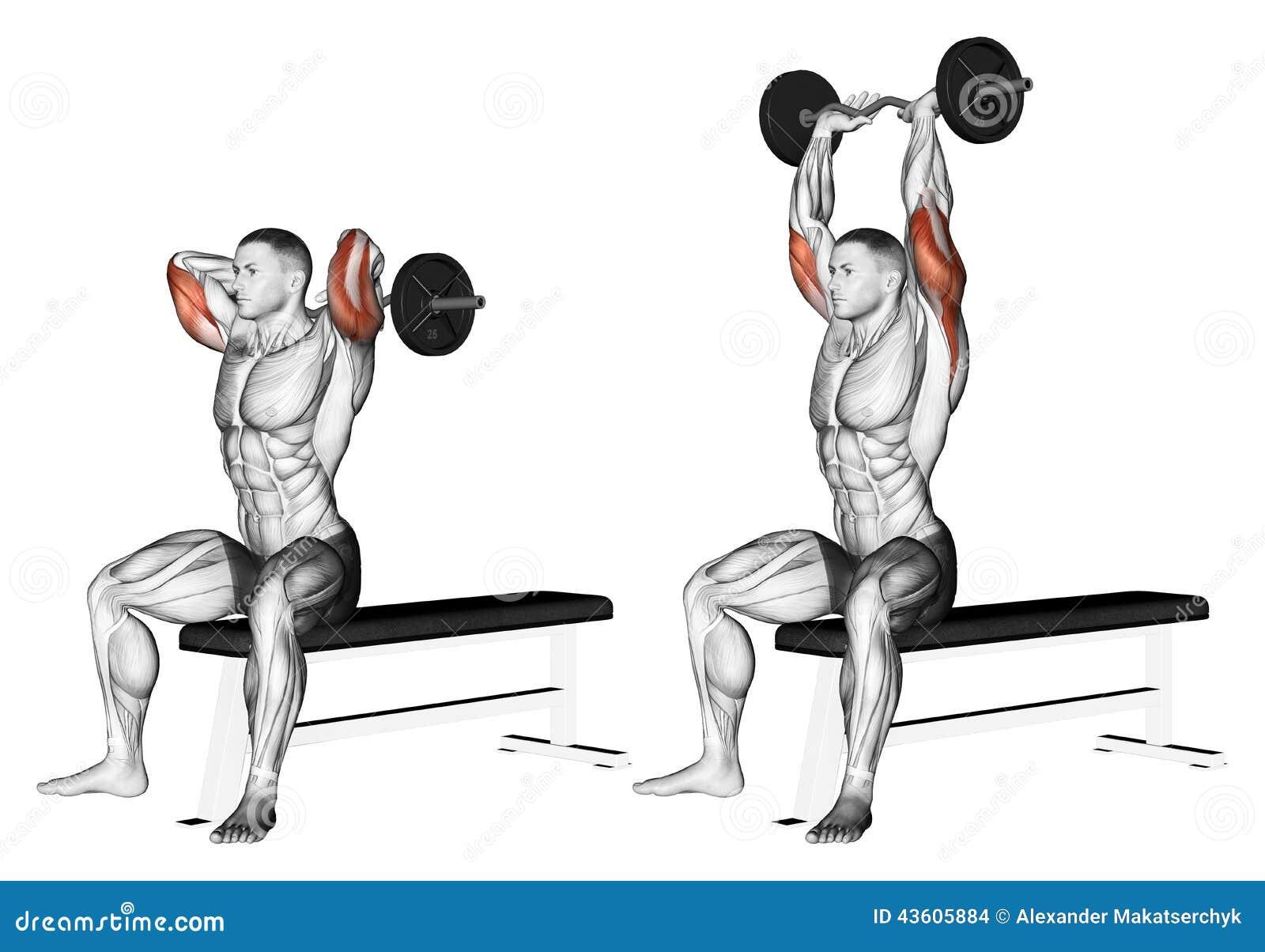 Exercising Brazos de extensión con el barbell curvado de detrás la cabeza