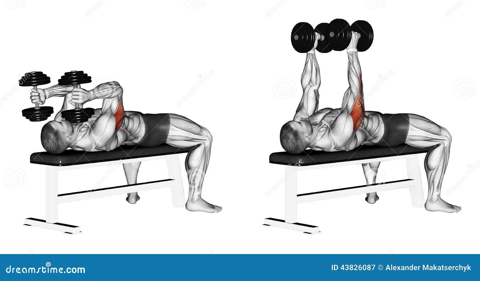 Exercising Brazos de extensión con la mentira de las pesas de gimnasia