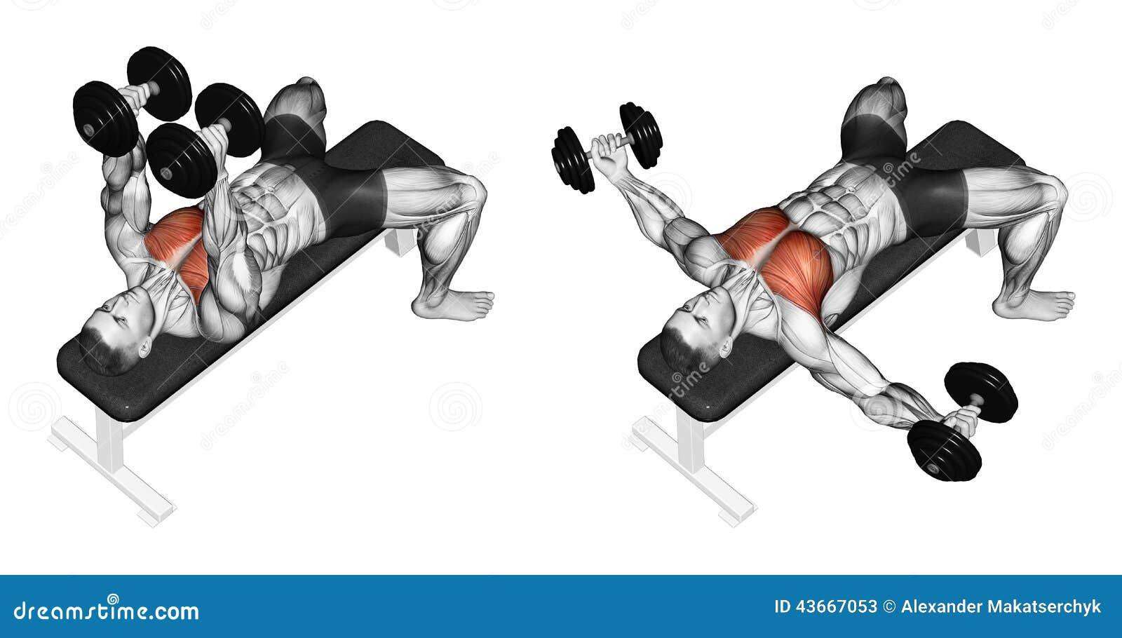 Exercising Breeding Dumbbells Lying Stock Illustration