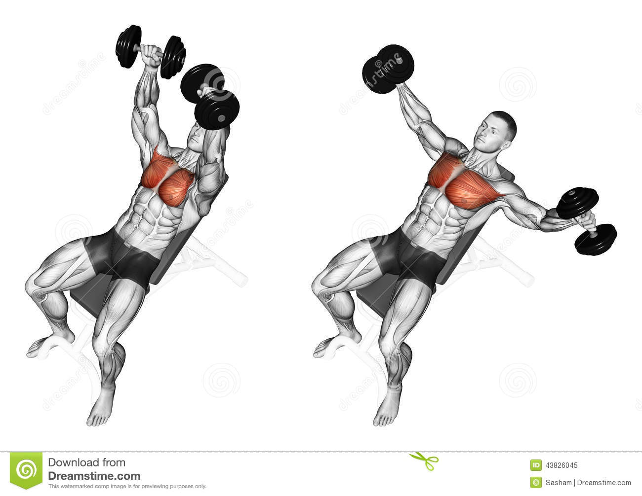 Exercising. Breeding Dumbbells Lying On An Incline Stock