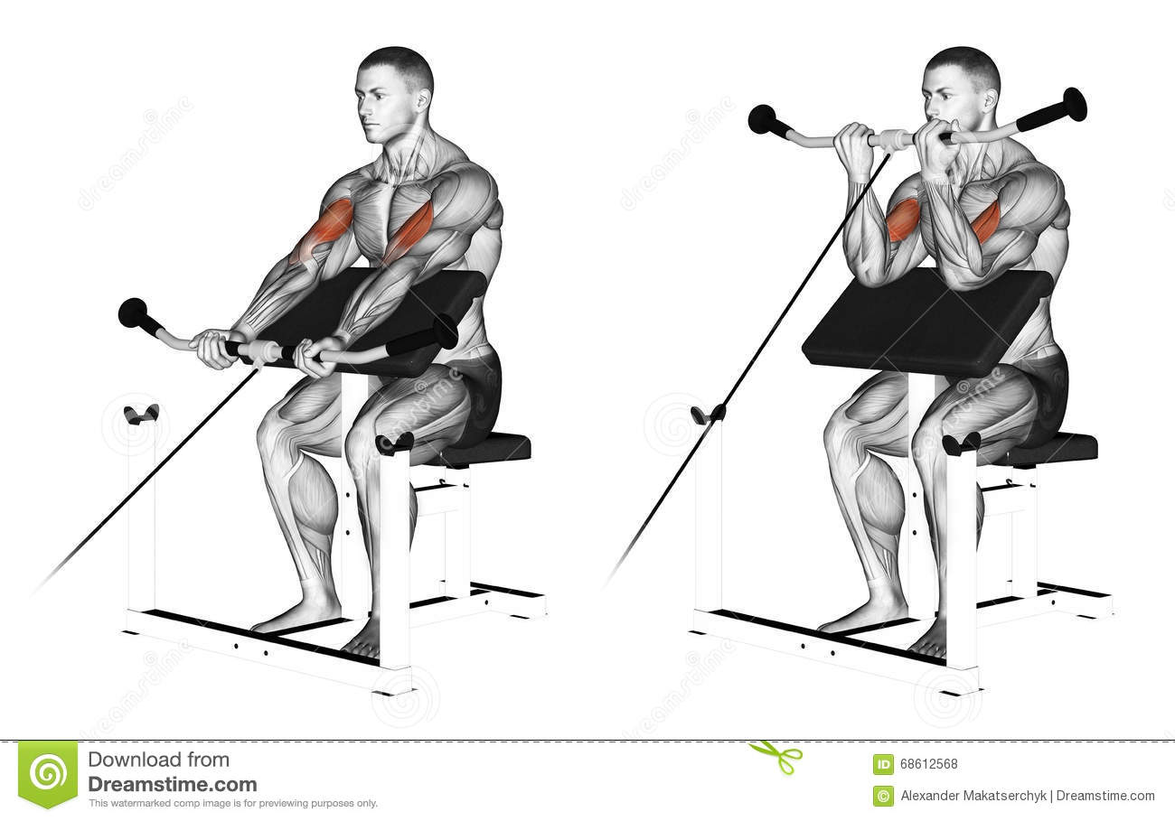 Exercising Cable Peacher Curl Stock Illustration