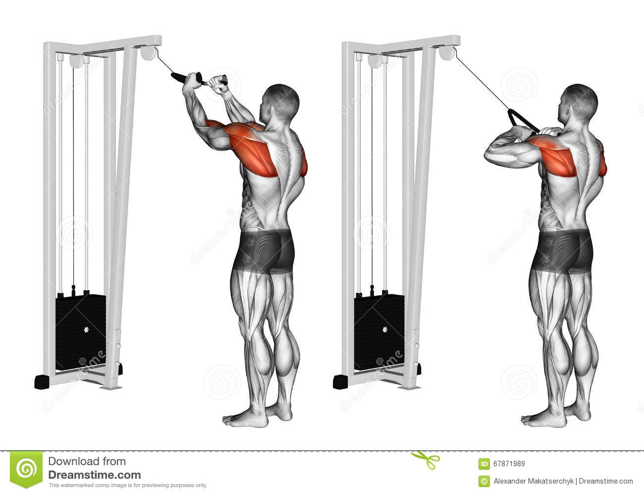 Exercising Cable Rope Rear Delt Rows Stock Illustration