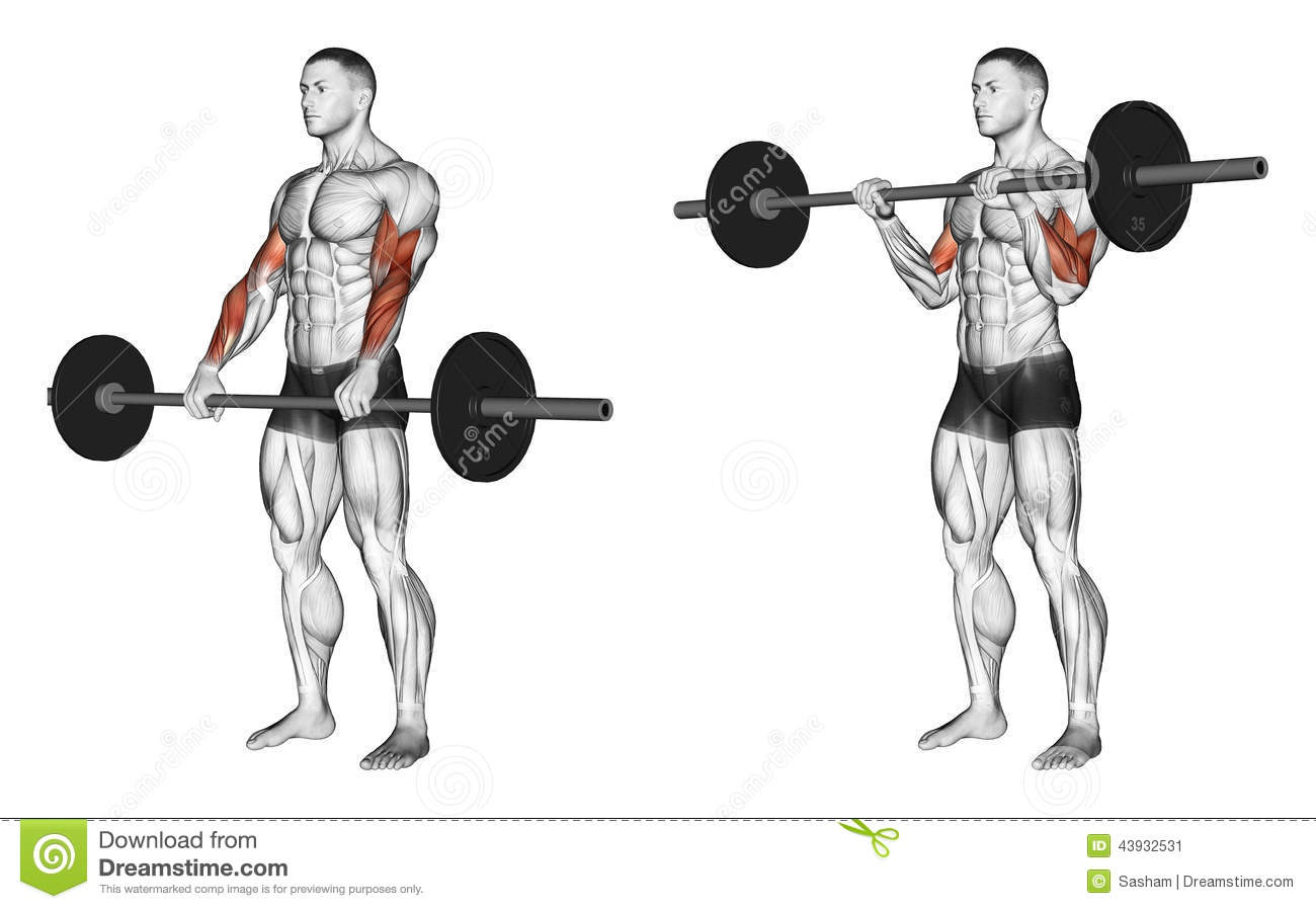Exercising. Curl with a barbell grip on top