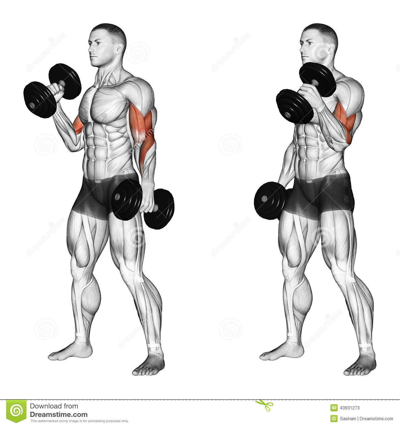 Exercising. Curl With A Dumbbell Grip Hammer Stock ...