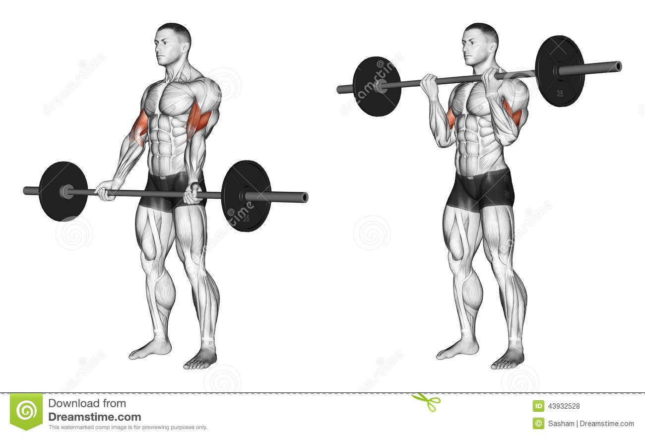Exercising. Curls With A Barbell Undergrip Stock