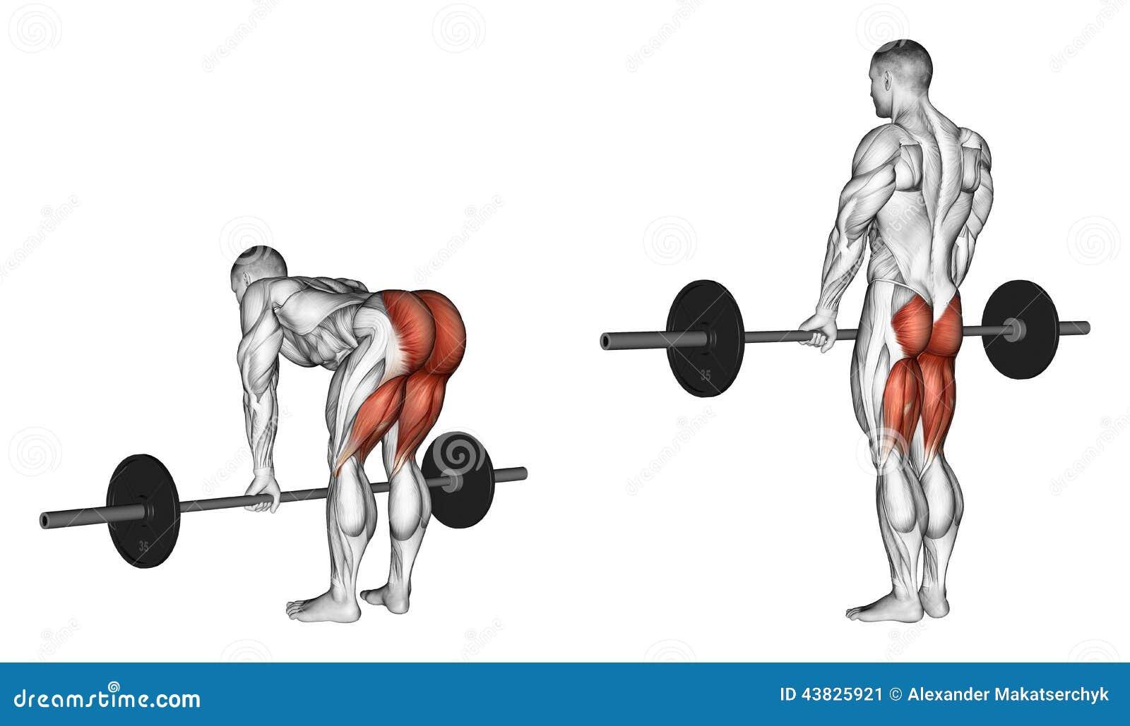 Exercising Deadlifts con un barbell, piernas derecho