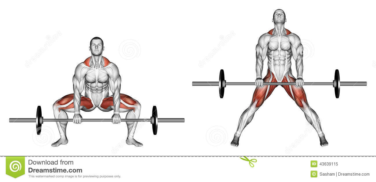 Exercising Deadlifts Sumo Stock Illustration Image