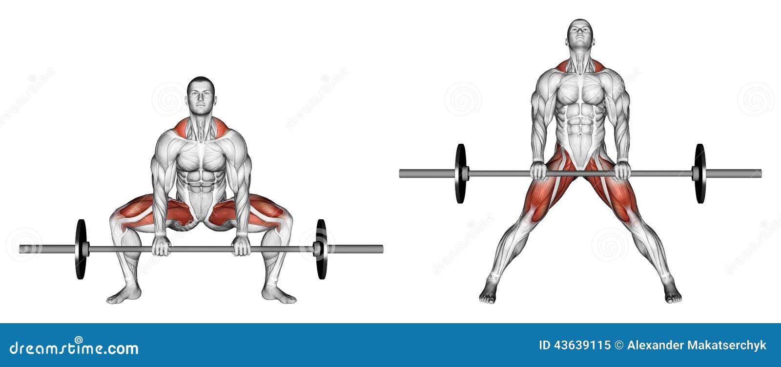 exercising deadlifts sumo stock illustration image