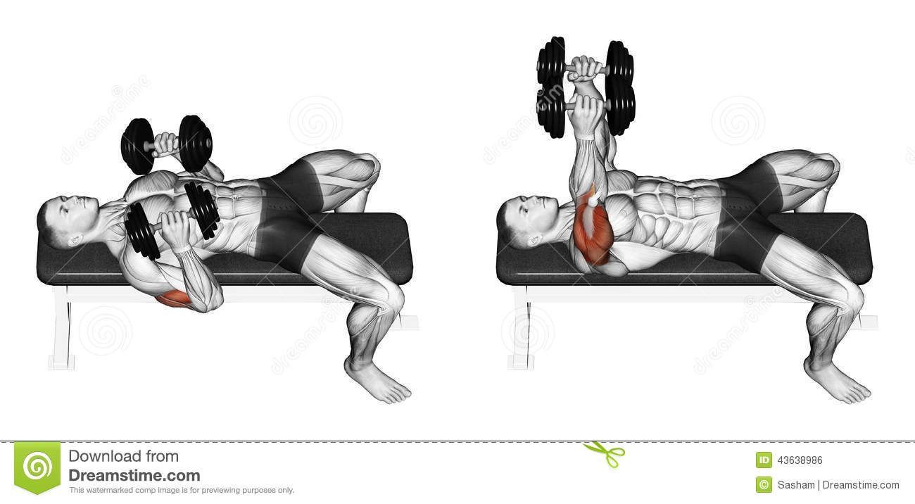 Exercising Dumbbell Bench Press Lying Down With Y Stock