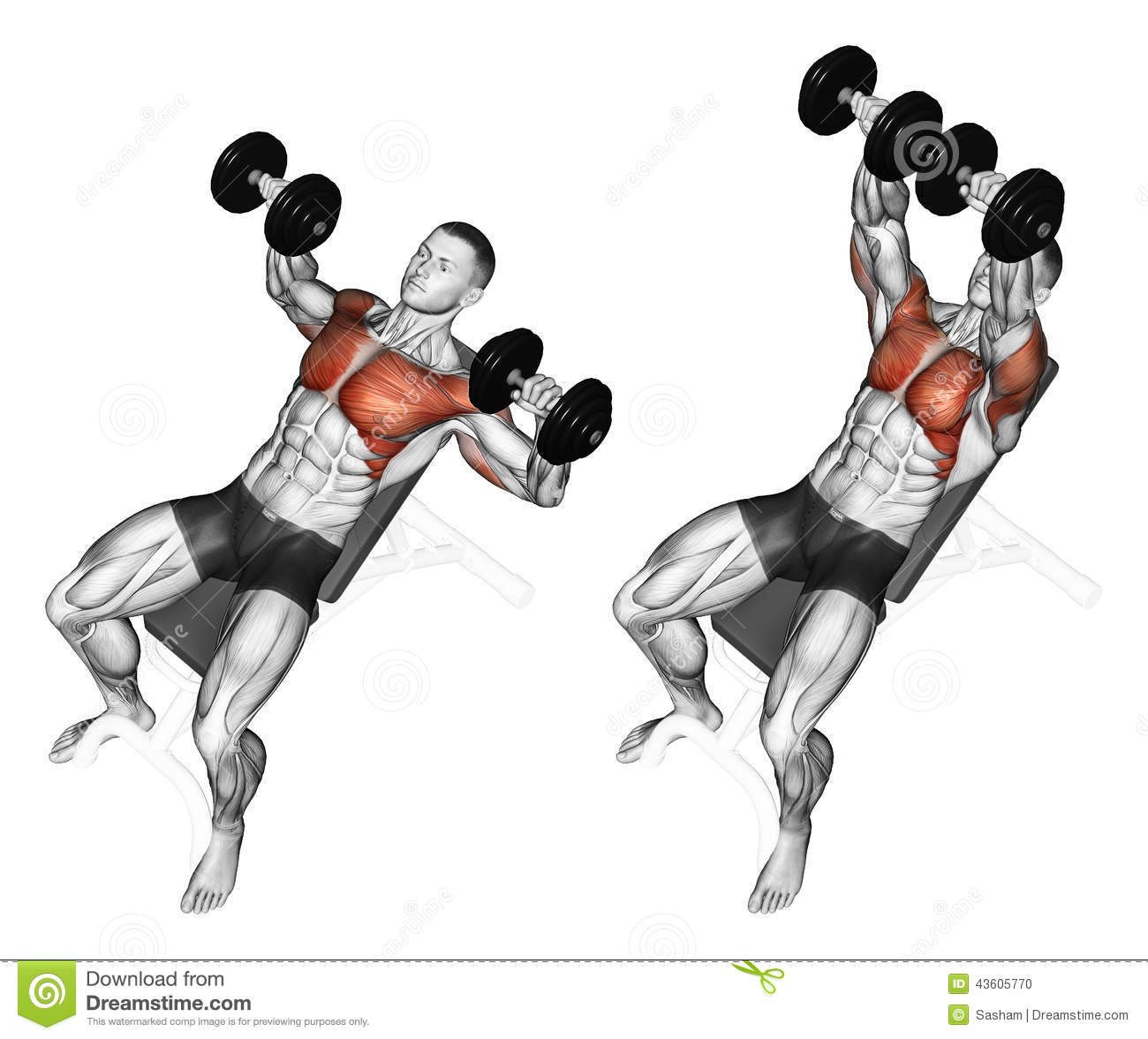 Image Gallery lying dumbbell press