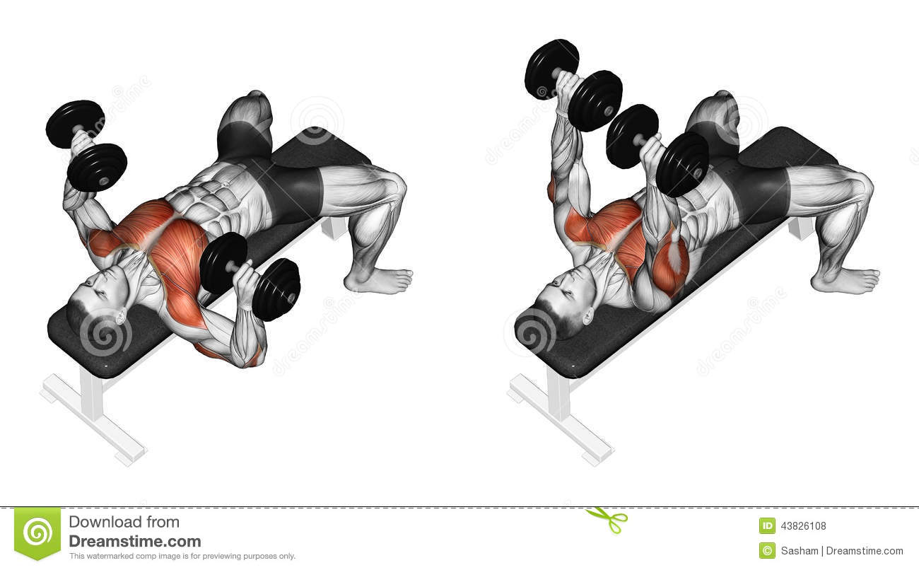Exercising Dumbbell Bench Press Lying Second Emb Stock