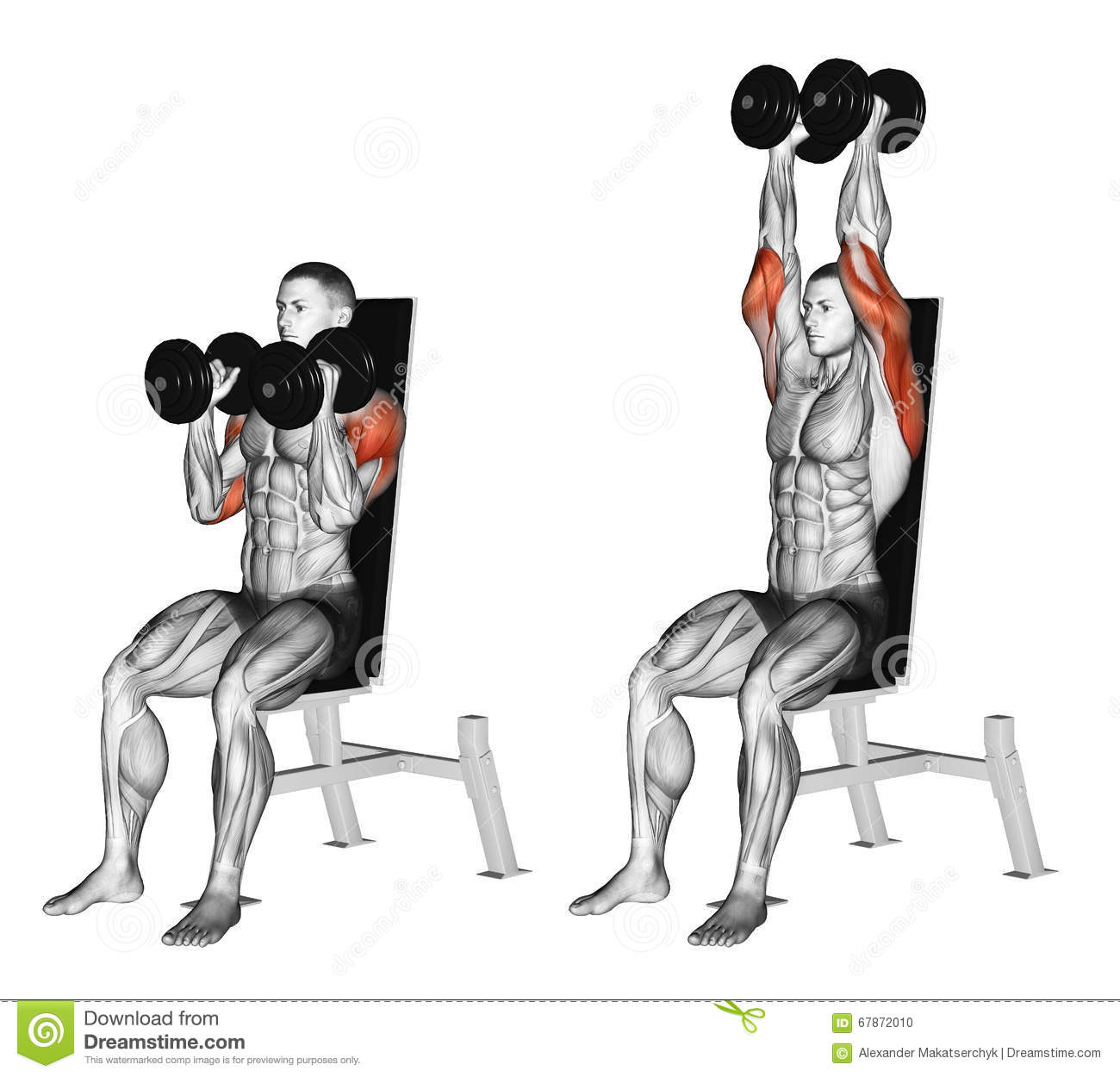 Quadriceps Bench Exercising Pacing With Dumbbells On