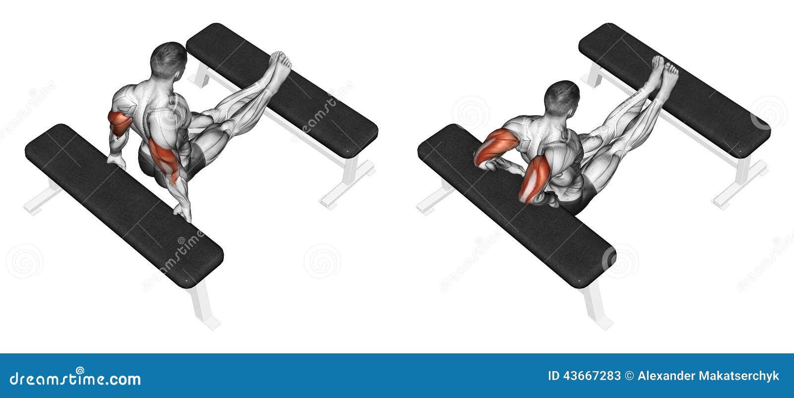 Exercising Exprimir el tríceps de nuevo al banco