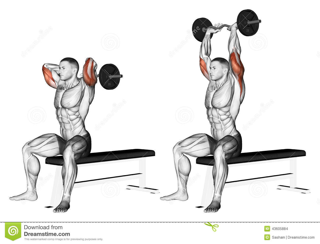Exercising. Extension Arms With Curved Barbell Fro Stock ...