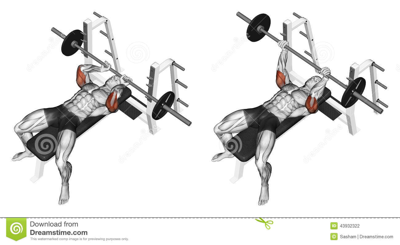 Exercising. Extension Barbell Lying Stock Illustration ...