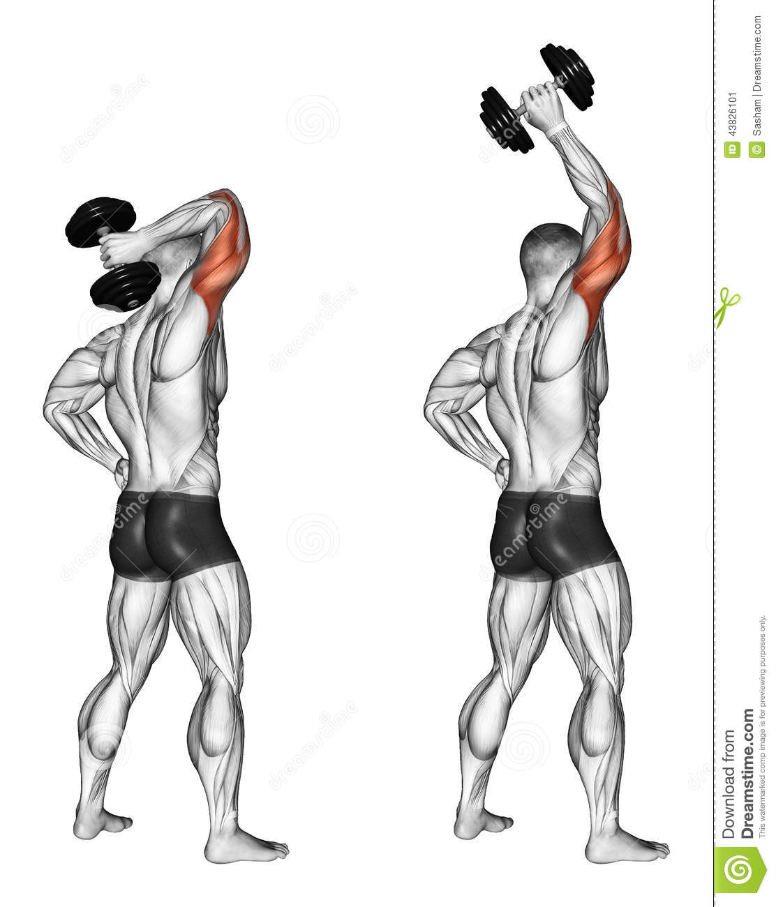 Exercising extension of one hand with a dumbbell stock