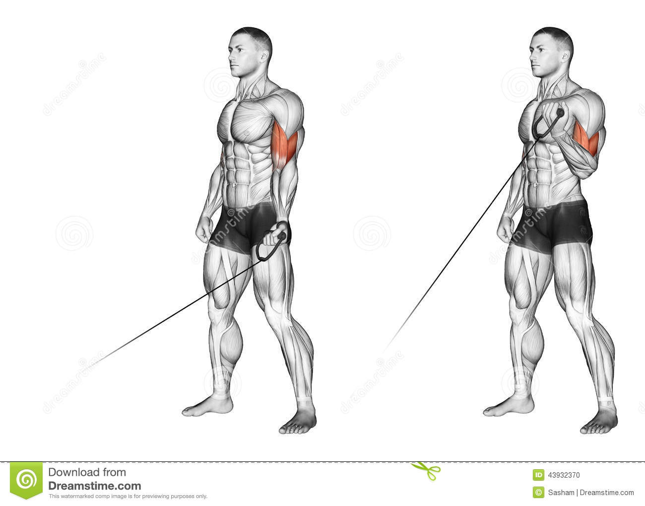 Exercising Flexion Of One Hand With The Handle Of Stock