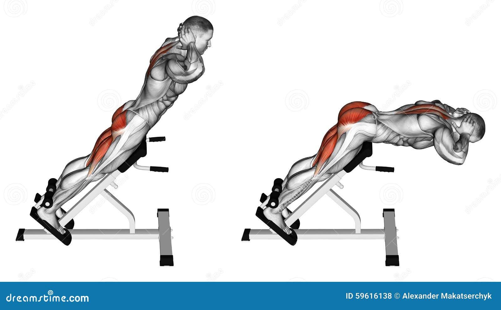 Exercising Hiperextensión